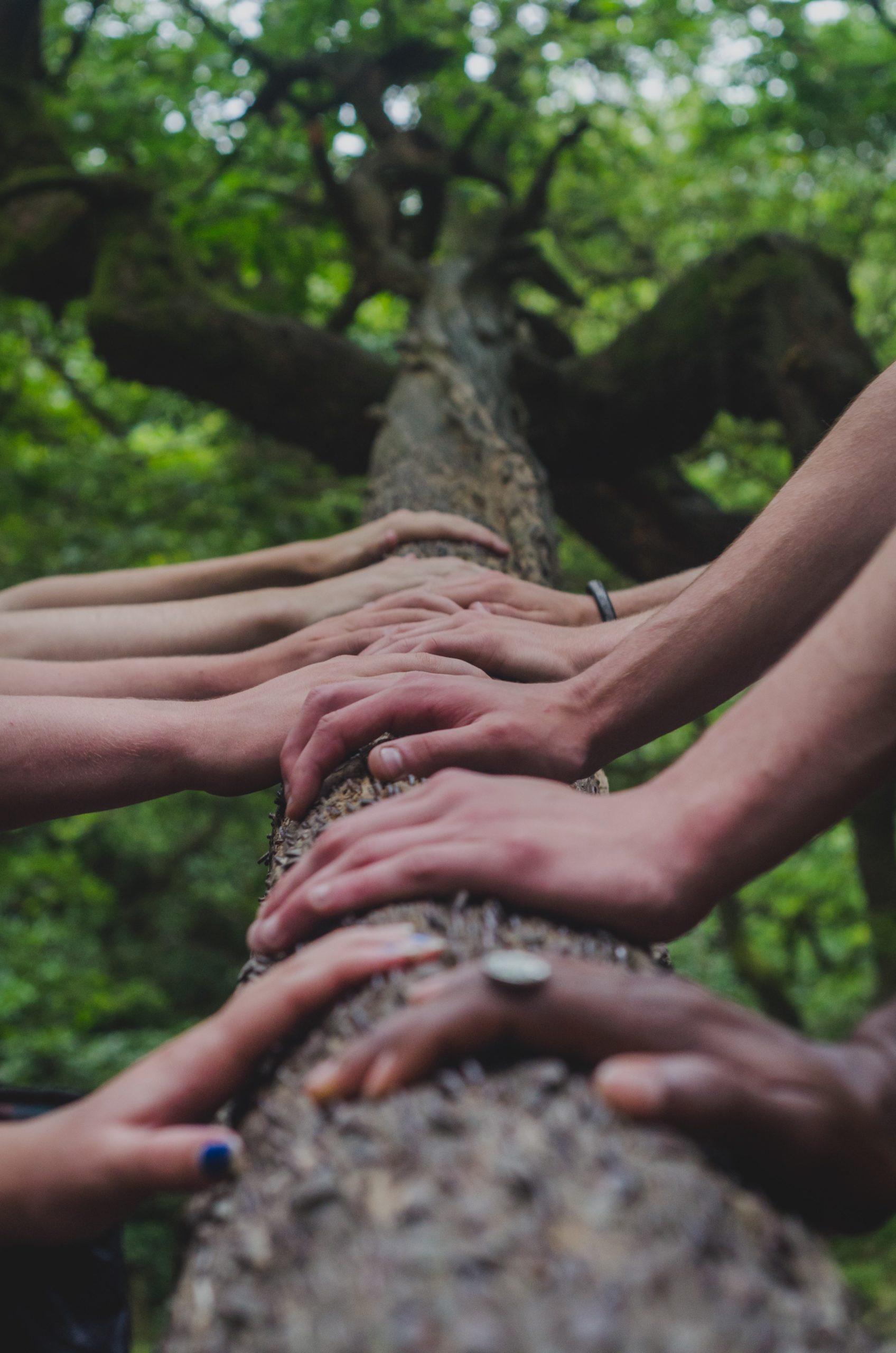 Photo de mains pour illustrer la page animations du site de l'association Takoda